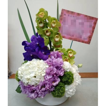 C0018祝賀盆花開幕喜慶會場盆花