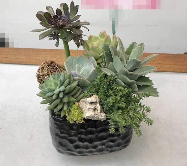 H007多肉植物組合盆栽