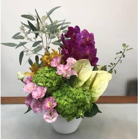 C0022祝賀盆花開幕喜慶會場盆花