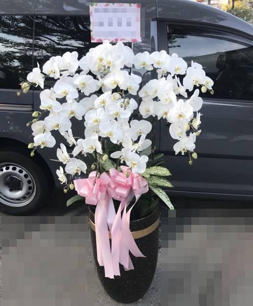 L007喪禮弔唁蝴蝶蘭盆栽-12株
