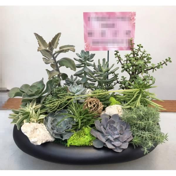 H0015多肉植物組合盆栽